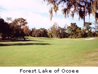 Forest Lake of Ocoee