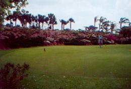 The Palmer Course at Saddlebrook Resort and Spa
